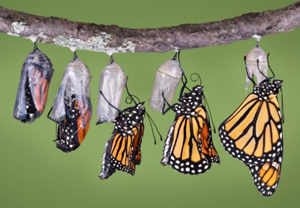 Like the caterpillar who transforms into a butterfly, change takes time. Being ready to change takes courage.